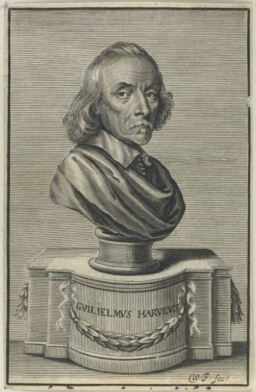 William Harvey, by William Faithorne, published 1653 - NPG D22768 - © National Portrait Gallery, London