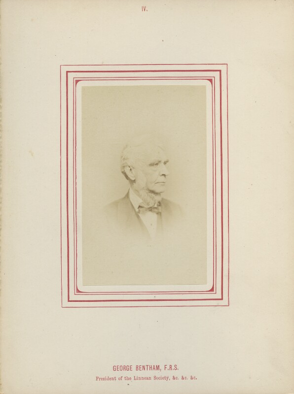 George Bentham, by George Charles Wallich, published by  John Van Voorst, published 1870 - NPG Ax14782 - © National Portrait Gallery, London