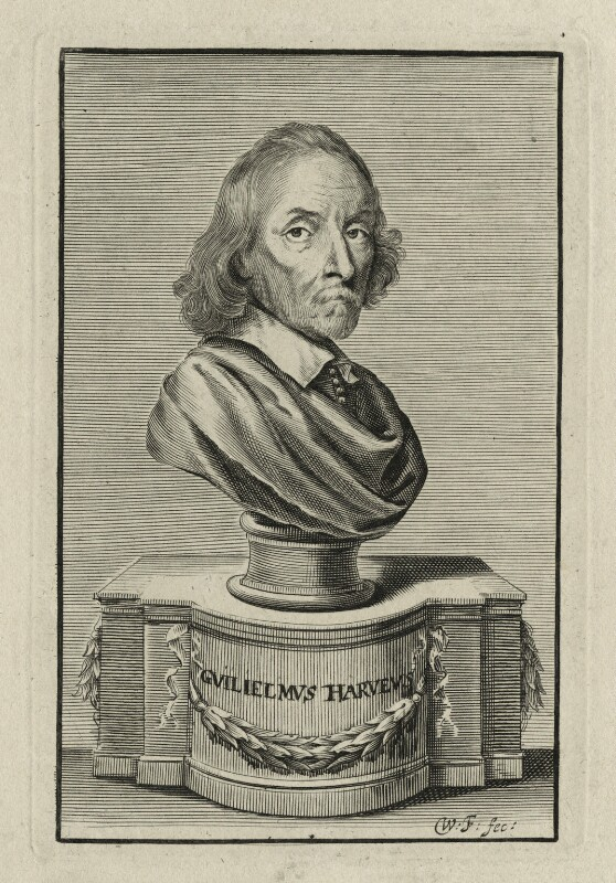 William Harvey, by William Faithorne, published 1653 - NPG D27265 - © National Portrait Gallery, London