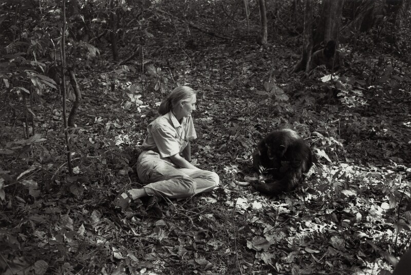 Dame Jane Goodall, by Ken Regan, circa 1989 - NPG x136430 - © reserved; collection National Portrait Gallery, London