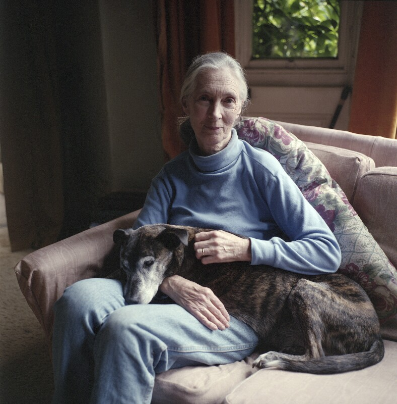 Dame (Valerie) Jane Goodall (née Morris-Goodall), by Jillian Edelstein, 1999 - NPG x200098 - © Jillian Edelstein / Camera Press
