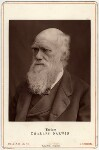 Charles Darwin, by Lock & Whitfield, 1877 - NPG  - © National Portrait Gallery, London