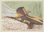 'Fashionable contrasts; - or - the Duchess's little shoe yeilding to the magnitude of the Duke's foot', by James Gillray, published by  Hannah Humphrey, published 24 January 1792 - NPG  - © National Portrait Gallery, London