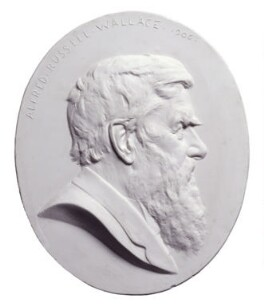 Alfred Russel Wallace, by Albert Bruce-Joy - NPG 1764