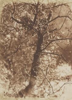 A Tree - at Colinton, by David Octavius Hill, and  Robert Adamson - NPG P6(240)