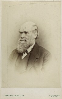 Charles Darwin, by London Stereoscopic & Photographic Company, after  Ernest Edwards, 1865-1866 - NPG Ax17797 - © National Portrait Gallery, London