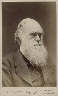 Charles Darwin, by Elliott & Fry, 1874 - NPG Ax18207 - © National Portrait Gallery, London