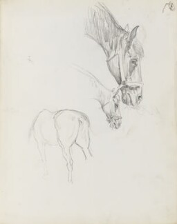 Horse study, by Percy Frederick Seaton Spence - NPG D23134(14)