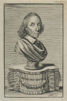 William Harvey, by William Faithorne, published 1653 or after - NPG D22769 - © National Portrait Gallery, London