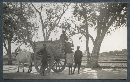 'On the road from Mysore to Bangalore', by Lady Ottoline Morrell - NPG Ax143743