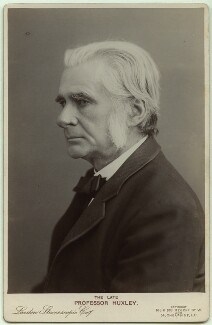 Thomas Henry Huxley, by London Stereoscopic & Photographic Company - NPG x46493