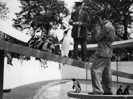 Walt Disney at the London Zoo, by Edward Malindine, for  Daily Herald - NPG x36479