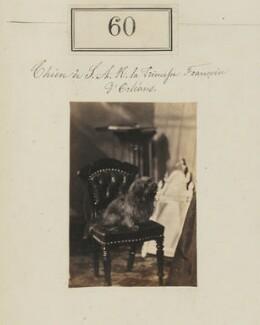 Princess Françoise Marie Amélie d'Orléans, Duchess of Chartres's dog, by Camille Silvy - NPG Ax50052