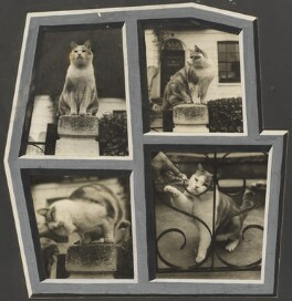Muff the cat, by Madame Yevonde - NPG x34355
