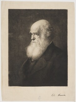 Charles Darwin, by Paul Adolphe Rajon, after  Walter William Ouless - NPG D34689