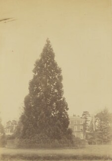 'Collingwood' (the house of Sir John Herschel), by Unknown photographer, circa 1860 - NPG x44703 - © National Portrait Gallery, London