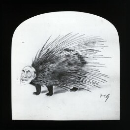 Unknown man, as a porcupine, after Sir Francis Carruthers Gould ('F.C.G.') - NPG D41970