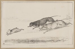 Coursing Extraordinary, by John ('HB') Doyle, printed by  Alfred Ducôte, published by  Thomas McLean - NPG D46334