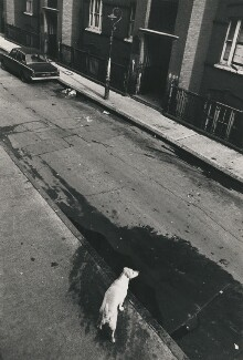 East End dog, by Harry Diamond - NPG x210304
