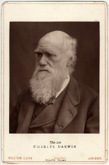 Charles Darwin, by Lock & Whitfield - NPG x5939