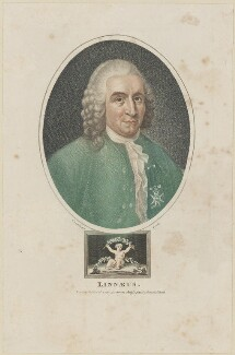 Carl Linnaeus, by John Chapman, published by  Jones and Adlard - NPG D14057