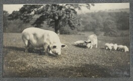 Pigs and Piglets, possibly by Philip Edward Morrell - NPG Ax140376