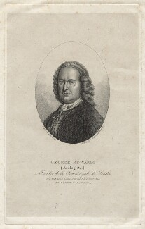 George Edwards, by Ambrose Tardieu, after  Bartholomew Dandridge - NPG D21110