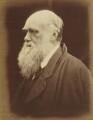 Charles Darwin, by Julia Margaret Cameron - NPG P8