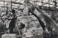 Ida Kar at the London Zoo, by Roger Hill - NPG x135224