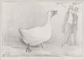 The Goose of the Capitol alias a Capital Goose!, by John ('HB') Doyle, printed by  Ducôte & Stephens, published by  Thomas McLean - NPG D41305