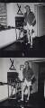 Ian Fleming, by Francis Goodman - NPG x195024