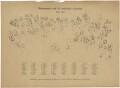 Shakespeare und die englische Literatur 1564-1864 (includes William Shakespeare and 87 other sitters), published by Friedrich Bruckmann, after  Wilhelm Lindenschmit the Younger - NPG D46393