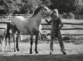 Rod Stewart, by Terry O'Neill - NPG x45097