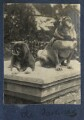 'The darlings' (Lady Ottoline Morrell's dogs Nutt and Soie), by Lady Ottoline Morrell - NPG Ax141266
